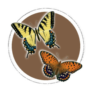 Butterfly Decals
