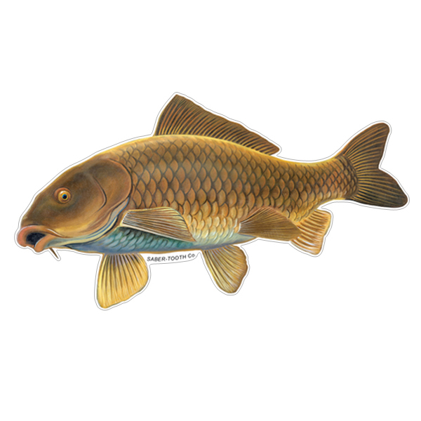 Common Carp Fish Decals Amp Stickers Saber Tooth Co
