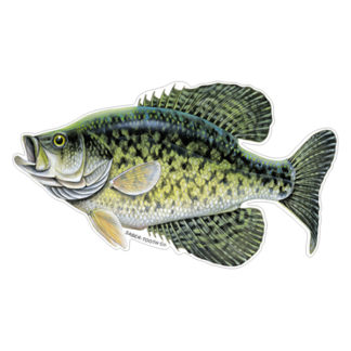 Largemouth Bass Fish Decals Amp Stickers Saber Tooth Co