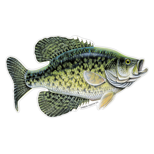 Crappie Fish Decals Amp Stickers For Car Truck Or Boat