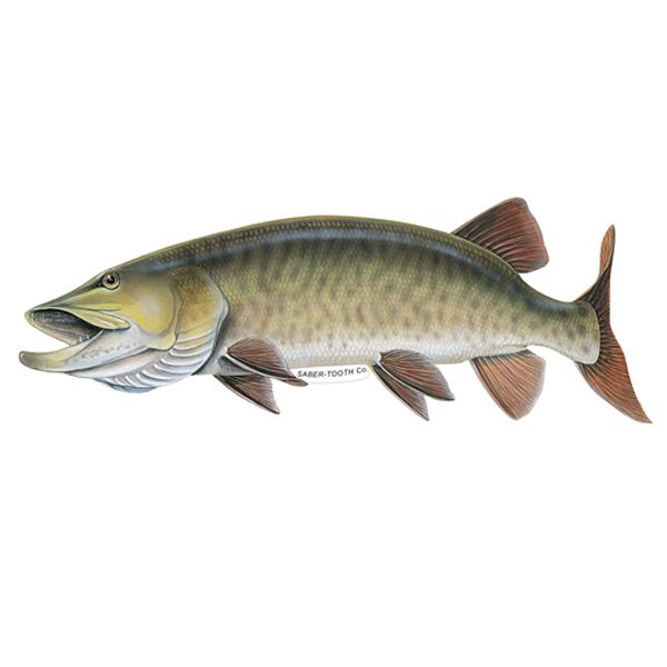 Musky Fish Decals And Stickers For Car Truck Or Boat