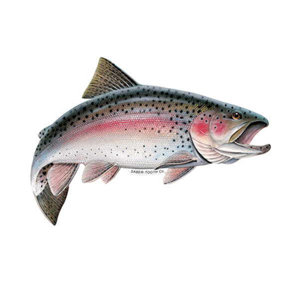 Rainbow Trout Fish Decals Amp Stickers Saber Tooth Co