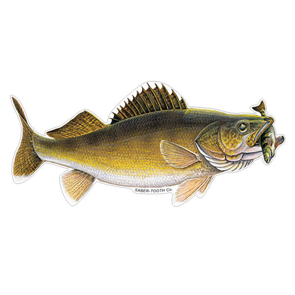 Walleye With Perch Fish Decals Amp Stickers Saber Tooth Co