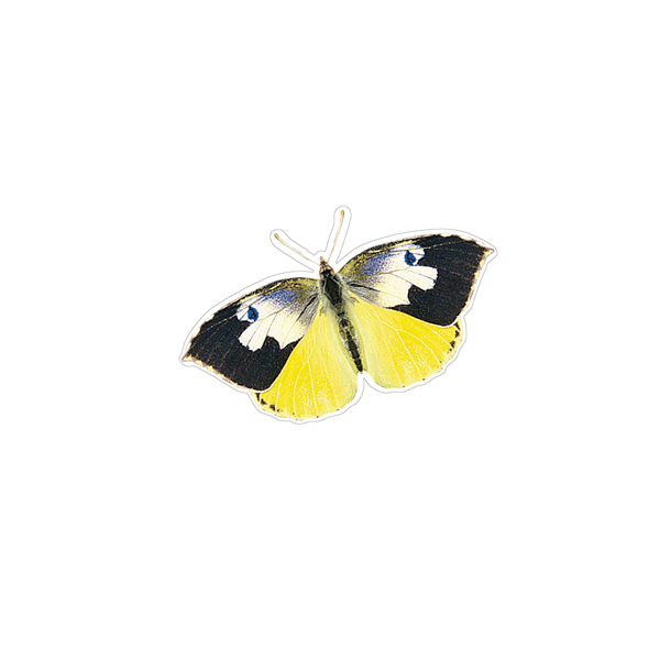 California Dogface Butterfly Decals Saber Tooth Co